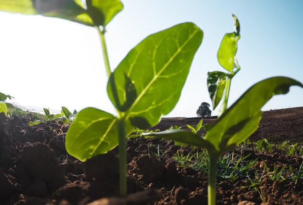 Studiu-cum-este-afectata-agricultura-de-schimbarile-climatice