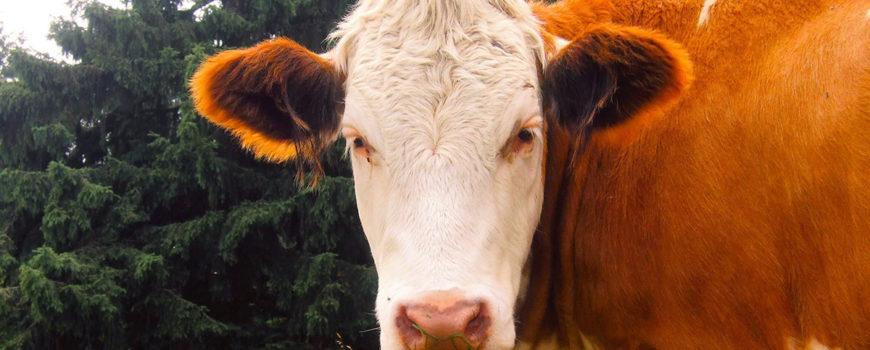 Deparazitarea-la-animale-cateva-informatii-extrem-de-utile