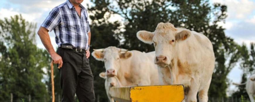 AFIR-pana-la-15.000-de-euro-pentru-micii-fermieri.-Cum-pot-fi-cheltuiti-banii