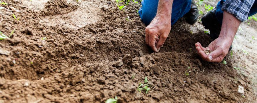 MADR-ce-beneficii-pot-avea-fermierii-care-folosesc-seminte-certificate